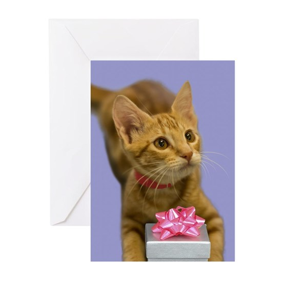 Tabby Kitten with Gift Birthday