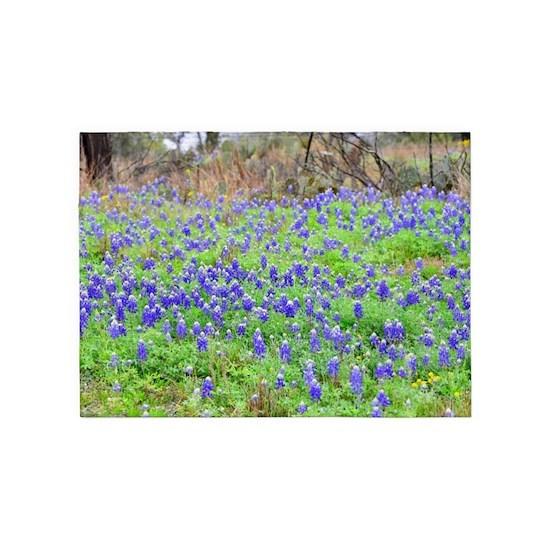 Spring 2017 Bluebonnets