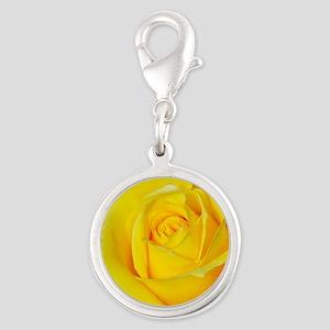 Beautiful single yellow rose Charms