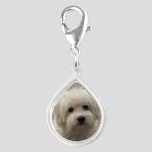 coton de tulear puppy Charms