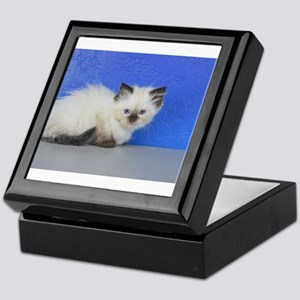 Anna - Seal Point Ragdoll Kitten Keepsake Box