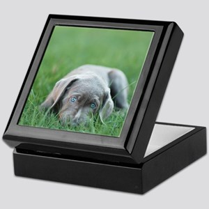 Blue eyed puppy resting on grass. Keepsake Box