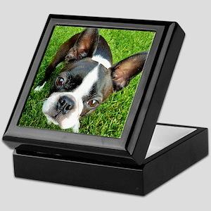 Boston Terrier Gaze Keepsake Box