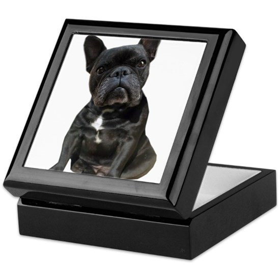 Black French Bulldog Portrait