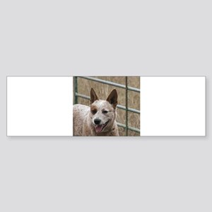 australian cattle dog red Bumper Sticker