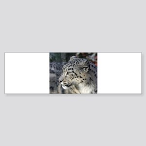 Leopard002 Bumper Sticker
