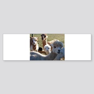 ALPACA FAMILY PORTRAIT III Bumper Sticker
