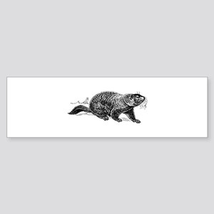 Ground Hog Day Bumper Sticker