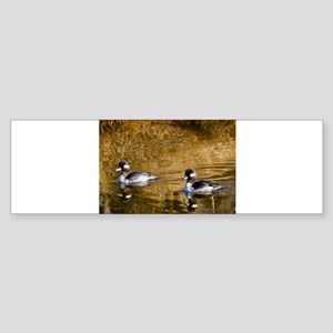 Bufflehead swimming in the winter Bumper Sticker