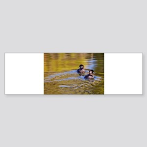 Bufflehead swimming Bumper Sticker