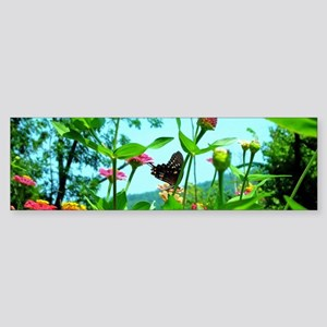 Black Swallowtail Butterfly Bumper Sticker