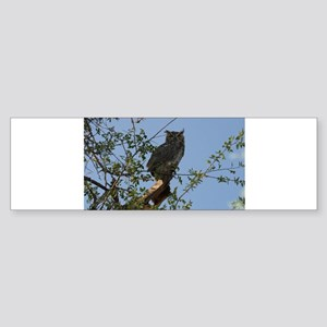 Great Horned Owl Staring Bumper Sticker