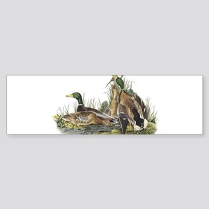 Mallard Duck Sticker (Bumper)