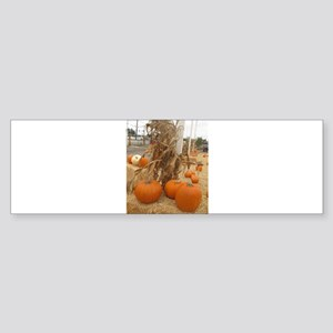 orange pumpkin stalk Bumper Sticker