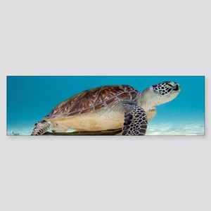 Sea Turtle Bumper Sticker