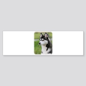 Siberian Husky 9Y570D-006 Sticker (Bumper)