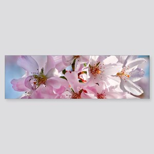 Japanese Cherry Blossoms Sticker (Bumper)
