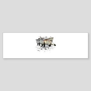 Ferrets Bumper Sticker