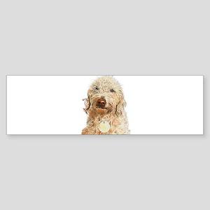 Labradoodle Ginger Bumper Sticker