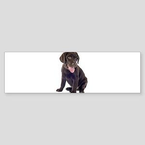 Chocolate, Lab, puppy Bumper Sticker