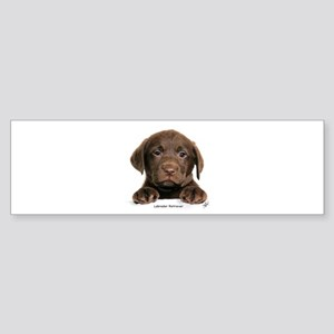 Chocolate Labrador Retriever puppy 9Y270D-050 Stic