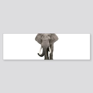 Realistic elephant design Bumper Sticker