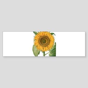 Vintage Sunflower Basilius Besler Bumper Sticker