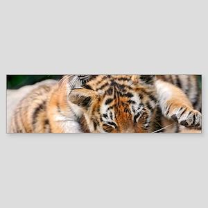 BABY TIGERS Sticker (Bumper)