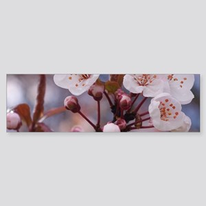 CHERRY BLOSSOMS Sticker (Bumper)