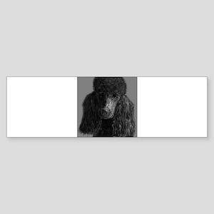 standard poodle black Bumper Sticker