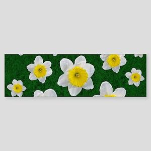 Spring Daffodils Bumper Sticker