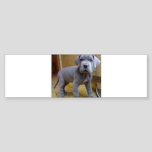 great dane blue puppy ls Bumper Sticker