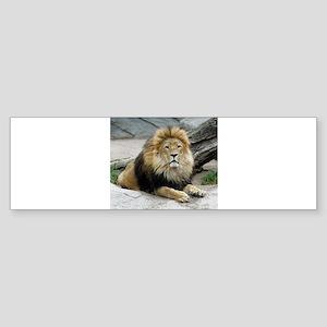 Lion_2014_1001 Bumper Sticker