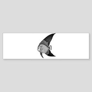 Vintage Angel Fish illustration Bumper Sticker