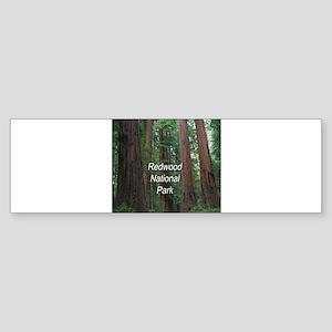 Redwood National Park Sticker (Bumper)