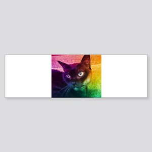 Burmese Cat Portrait B Bumper Sticker