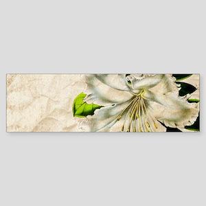 french botanical white lily Bumper Sticker