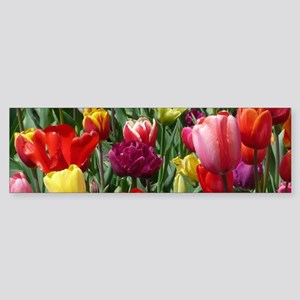 Tulip_2015_0207 Bumper Sticker