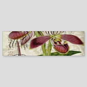 vintage orchid french botanical Bumper Sticker