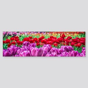 Tulip Field Bumper Sticker