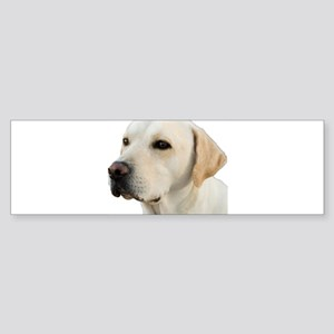 Yellow Lab Head Sticker (Bumper)