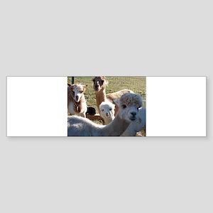 ALPACA FAMILY PORTRAIT™ Sticker (Bumper)