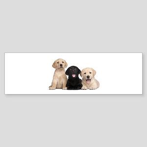 Labrador puppies Sticker (Bumper)