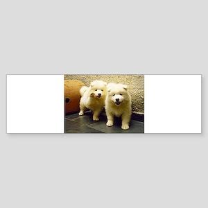 LS samoyed puppy Bumper Sticker