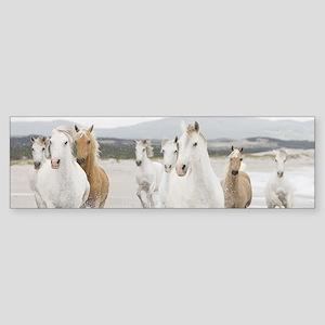 Horses Running On The Beach Bumper Sticker