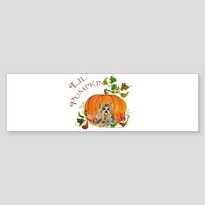 Pumpkin Yorkshire Terrier Bumper Sticker