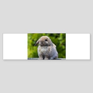 Bunny Bumper Sticker