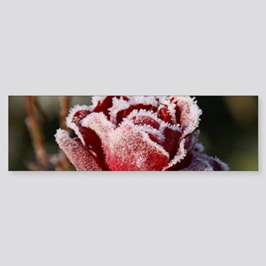 Rose With Frost On It Bumper Sticker