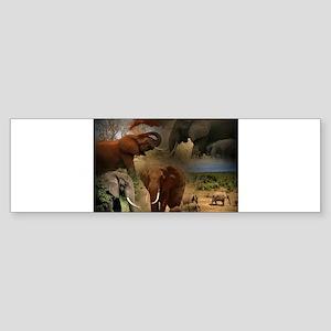 Elephant Bumper Sticker