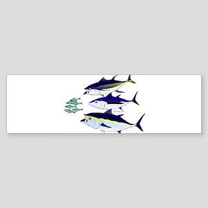 Three Tuna Chase Sardines fish Sticker (Bumper)